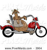 Clipart of a Chubby Male Cow Driving a Motorcycle Hog by Djart