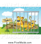 Clipart of Caged Zoo Tigers by Graphics RF